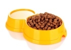 Market research on the pet food segment - PMR